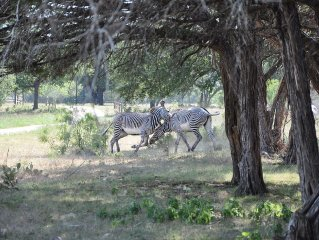 Africa Wildlife Park, Log Cabin and Lodges (Sleep up to 27 in 3 separate houses)
