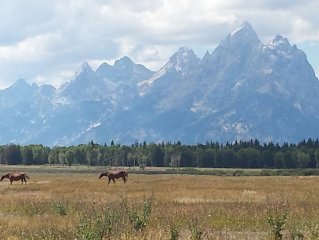 True 'Cabin in the Woods' near Grand Teton & Yellowstone National Parks!