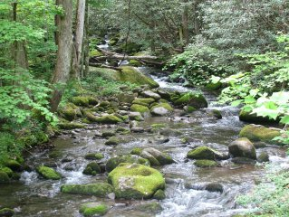 Peaceful Creekside Cabin near Gatlinburg/Pigeon Forge - PRICE MATCH RATES