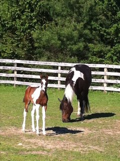 Mother and Baby in pasture for small barn.