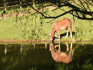Private Equestrian Estate- Beautiful Retreat, Perfect Location, Quality Property