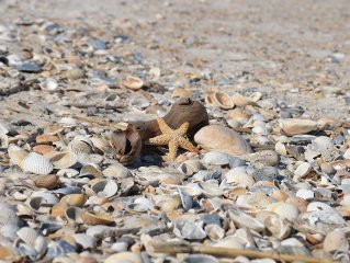 Enjoy the best Fernandina Beach has in comfort at our Going Coastal getaway.