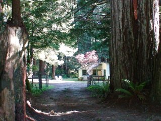 Amy's Redwood Cottage