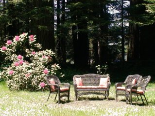 Amy's yard with flowering rhododendron.