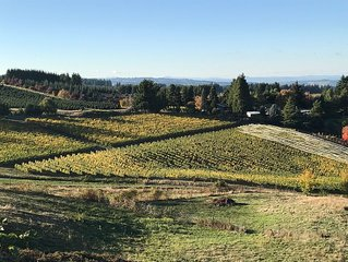 Wine country with views