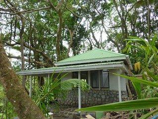 Cottage en pierres autour d'un arbre Banyan