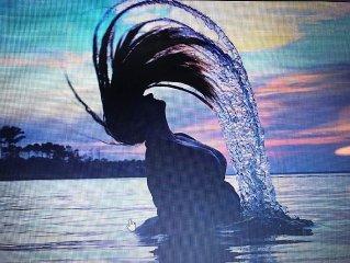 RIvershore Retreat -   Hunting/Fishing/Kayaking/Sailing Dream - Book Now!!!