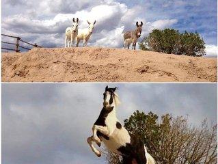 Casita de Chuparosa in Abiquiu!  Hot Tub,  Horse, Mini Donkeys,  Llama & Alpacas