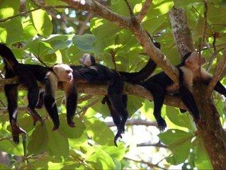 Casa Tres Monos- Stunning Garden/Beach Wildlife Viewing