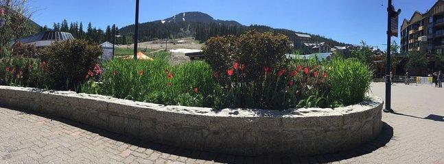 Vy över berget och blommor från byn