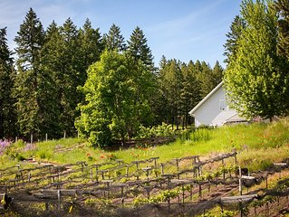 Spacious Cabin nestled in a vineyard and lavender farm, pets negotiable.