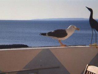 Appart. ''Le Goeland'' direct sur plage, vue  mer + clim.+ internet