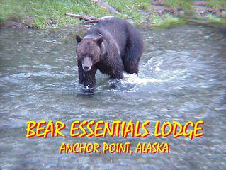 Bear Essentials Iliamna