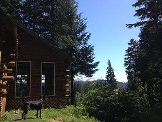 Quiet Alaskan Log Cabin In The Woods.