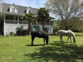 RIDE HORSES, 2 BD APT, Farm House!Come Ride and be near beaches & downtown!