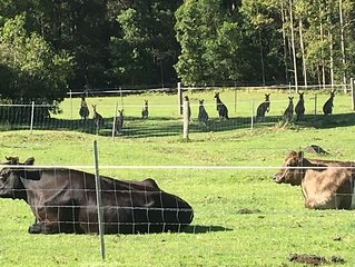 Beach, Bay & Farm Stay. A little bit of country, 5 minutes from Jervis Bay.