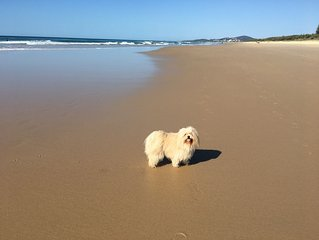 Dog Friendly Peregian Beach Home with Sunset Views