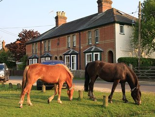 New Forest Cottage overlooking Green where ponies & forest animals often graze