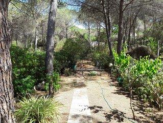 Nel golfo dell'Asinara,a 400 m dal mare,giardino immerso nella fantastica pineta