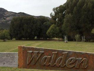 Walden*TrousersPoint