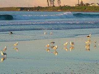 City To Surf - located at Thirroul