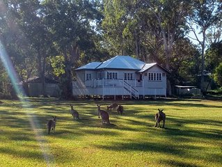 Lake Weyba Noosa Lodge & Friendly Kangaroos