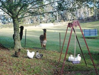 Tricklebeck Country Home on 6 acres with alpacas, chickens and picturesque dam