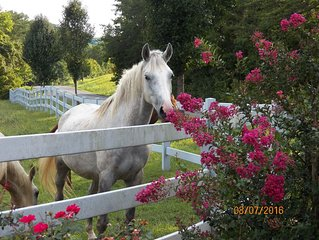 T-Lea Farm your 73 Acre Horse Farm Vaction Retreat in East Tennessee