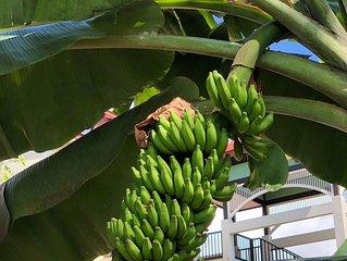 Tropical hideaway. Best Place on Eden  Island - seychelles