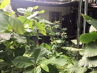 Chambre Dans Jardin Tropical