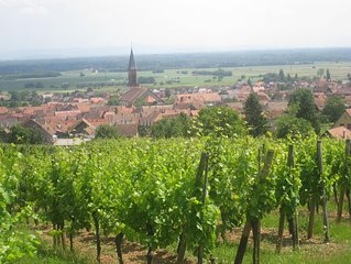 Gite sur la route des vins au calme avec belle vue sur chateau de Kintzheim