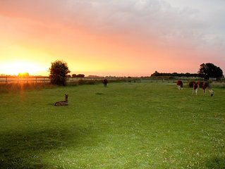 Glamping with Llamas... Luxury in a field!
