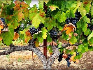 The Grape Escape, A Luxury California Wine Country Home