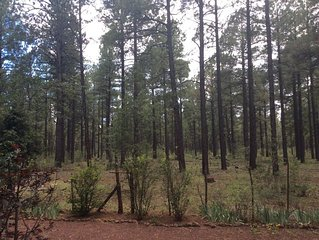Quiet, cozy, hideout in Pinetop, Arizona