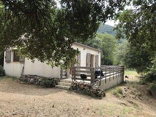 Maison  sur terrain arboré formé de 3 grandes restanques bordées d'arbres calme.