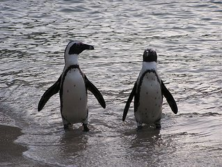 Swim with the Penguins!