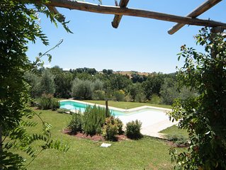 Large garden and beautiful swimming pool surrounded by olive threes