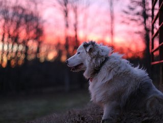Double Merle Farm Guest Cottage