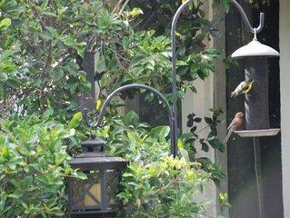 PASADENA - Birds, Butterflies and Books