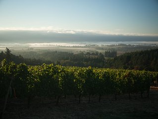 Winery Estate located in coveted Dundee Hills AVA