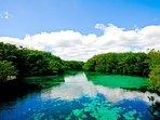Cenote Manati, Crystal Clear Fresh Water, Only 300 Yards From Casa Caribena.