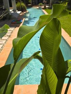 25 Metre Heated / Cooled Pool in Lush Tropical Well Maintained Garden