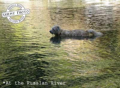 Hearthside Cabin, Guest Photo - Dog in the River