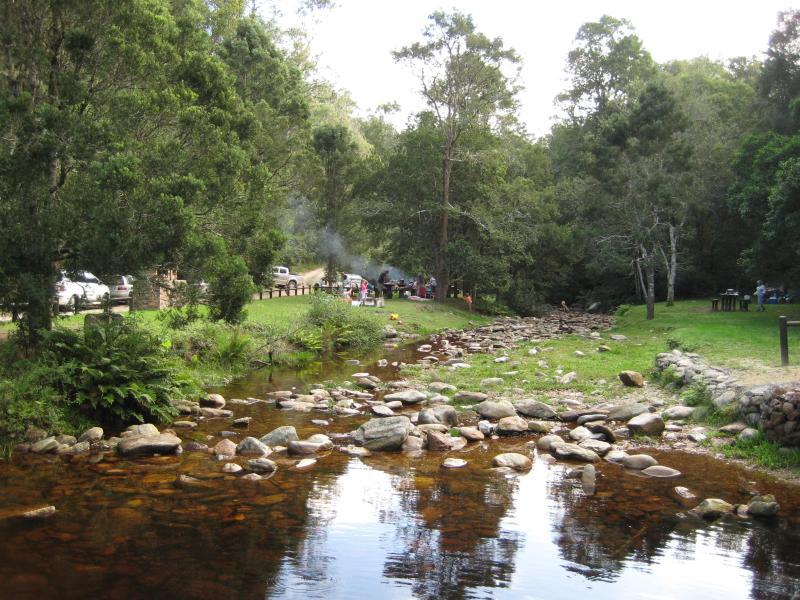 Jubileo de arroyo en el bosque de Knysna