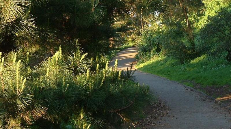Buena Vista Park Walking Paths 20 minute walk from YourHomeInSanFrancisco