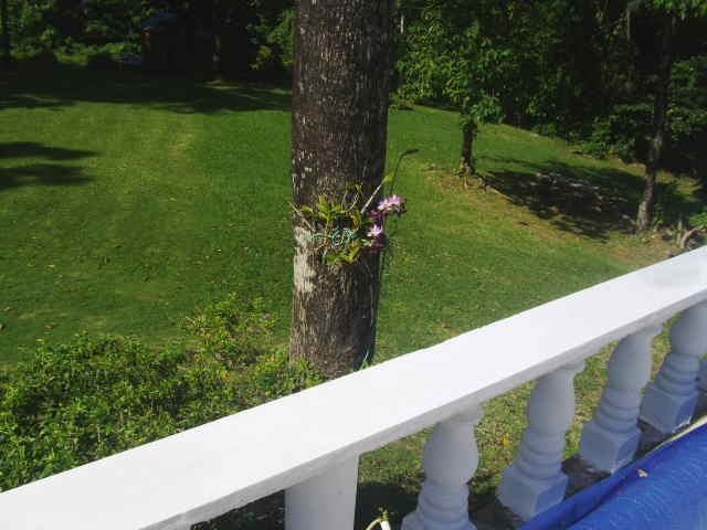 orchid in tree by pool