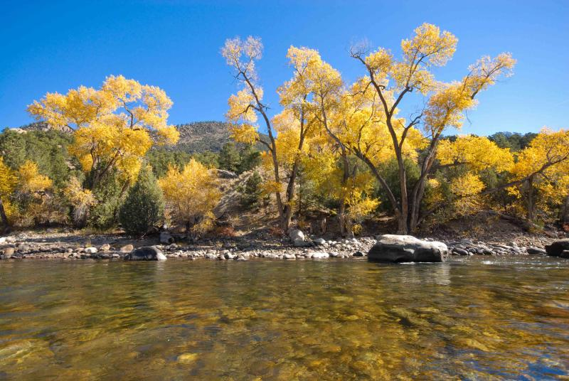 Walk 3 minutes and cast your fly into this pool on the Arkansas River! Walk extensive river trails