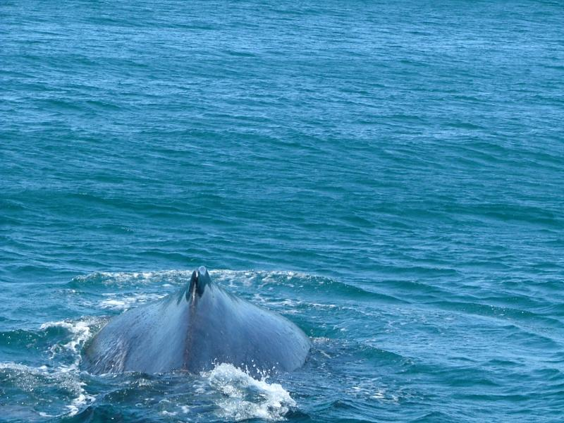 ACTIVITIES: Whale watching in Buzios - snapped by owner of Casa Vista Azul