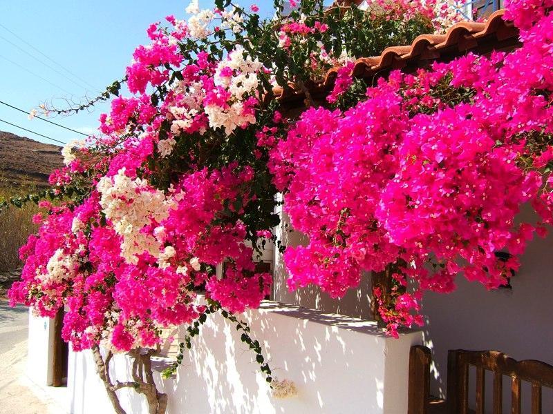 Villa Abela bietet auch 3-Zimmer-Appartements in einem separaten Gebäude - perfekt für große Familienfeiern