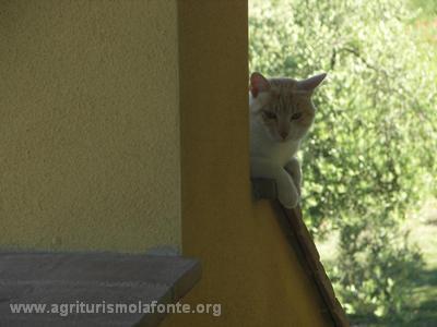 Cat at La fonte